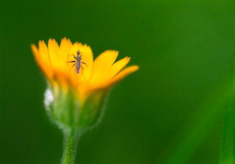 Fotografía macro de insecto sobre flor amarilla
