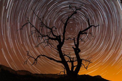 Fotografía nocturna circumpolar con silueta de árbol muerto